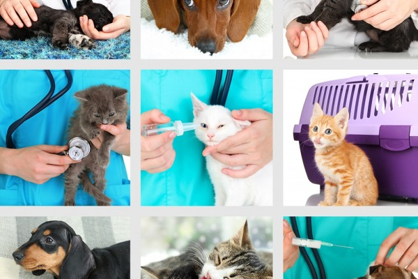 Collage of different pets at vet