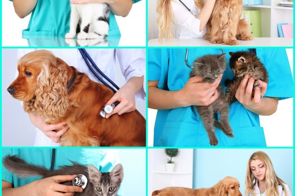 Collage of pets at vet