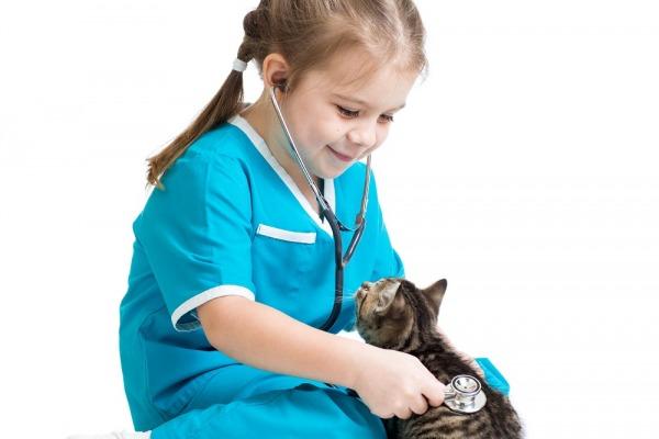 животные, домашние животные, общаться с животными