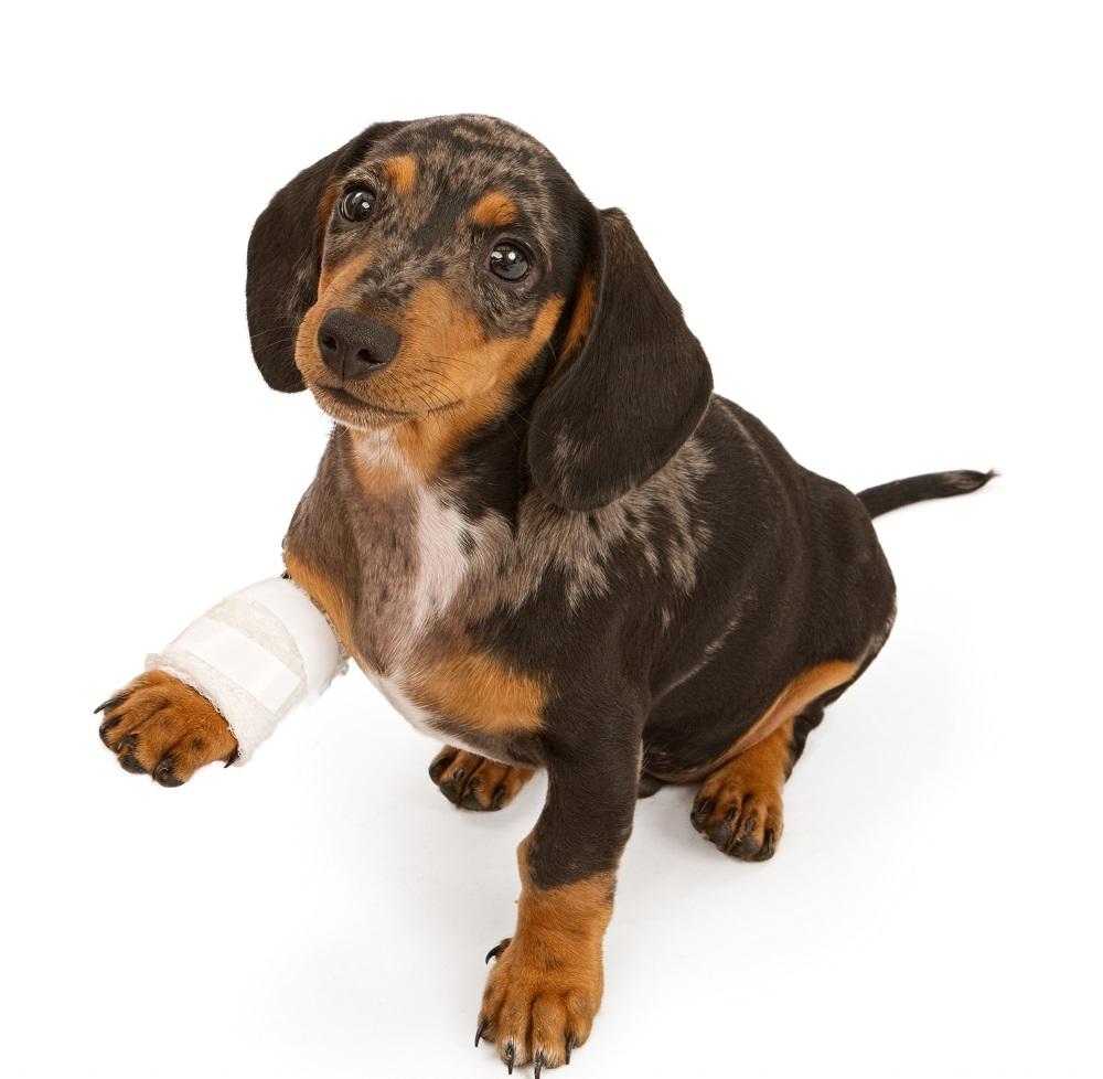 артритом, собаки