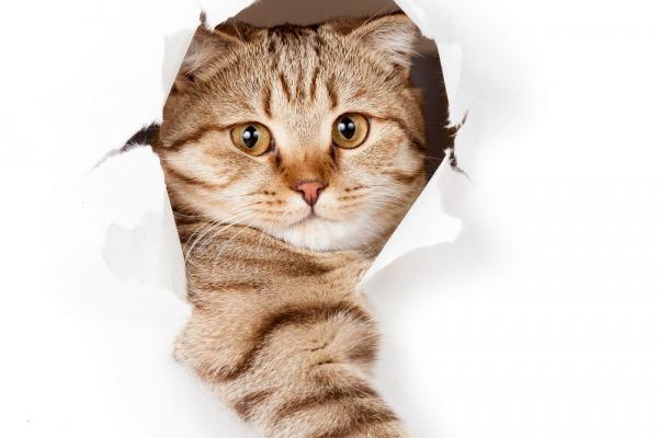 кошки, собаки, школу питомцев