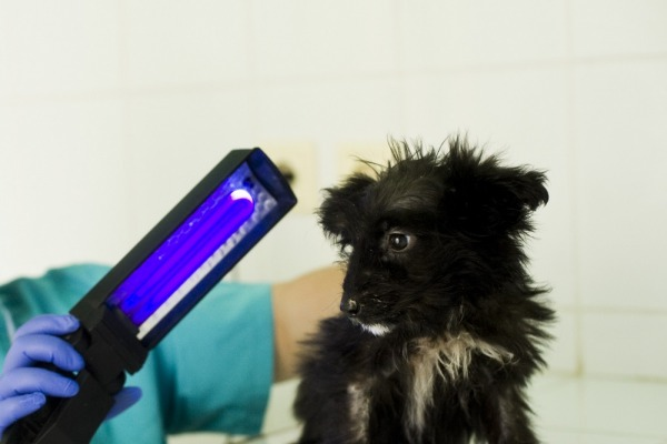 собаки, кошки, питомца от бактерий