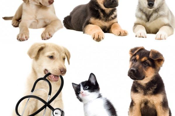 собаки, кошки, школу питомцев