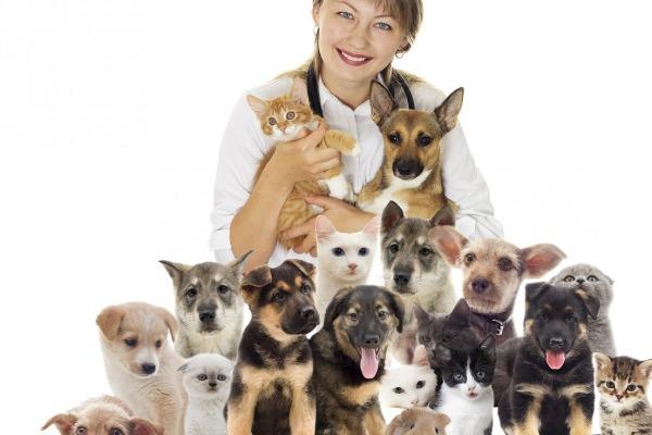 домашние животные, животные, общаться с животными