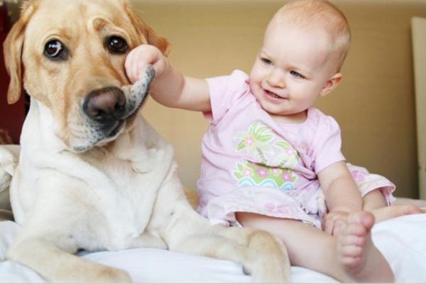 Закон об ответственном обращении с животными - Телеветеринар