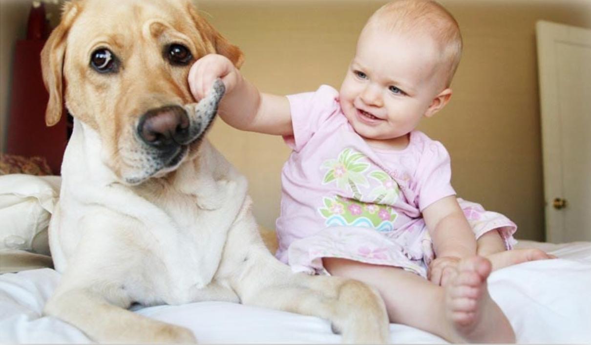 Общаться с животными