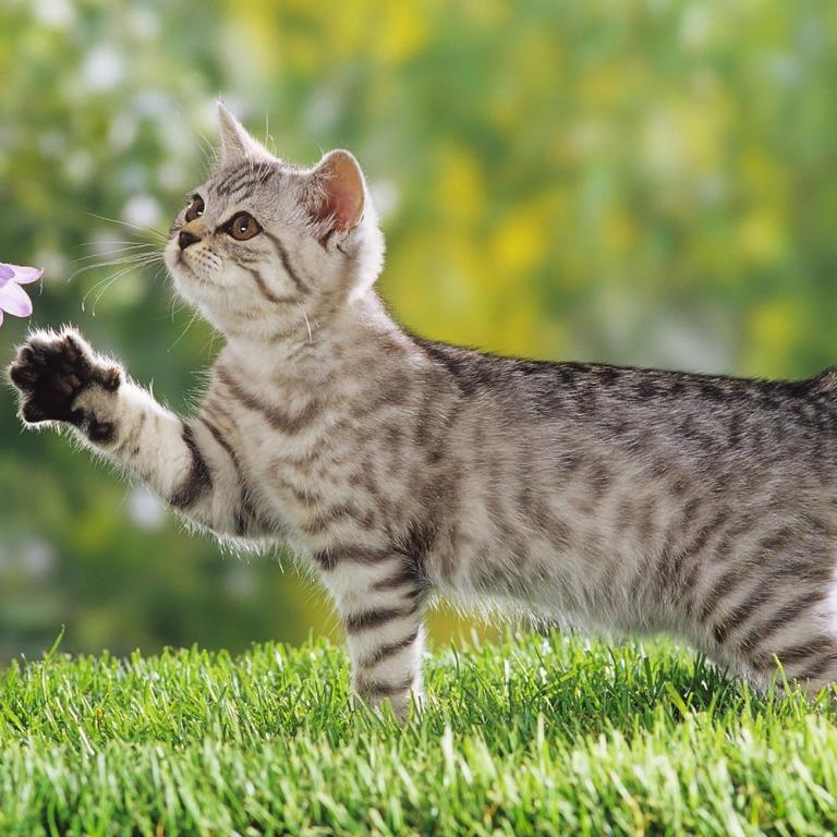 уходе за первой кошкой