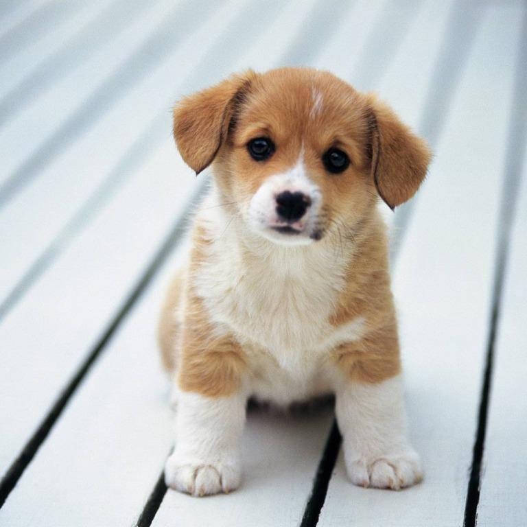 приучить вашего щенка
