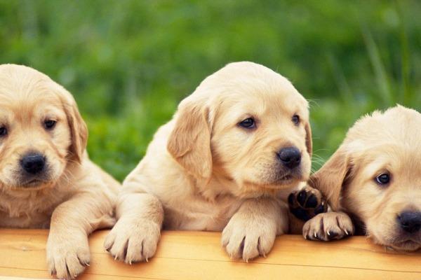 приучить вашего щенка - поставьте будильник