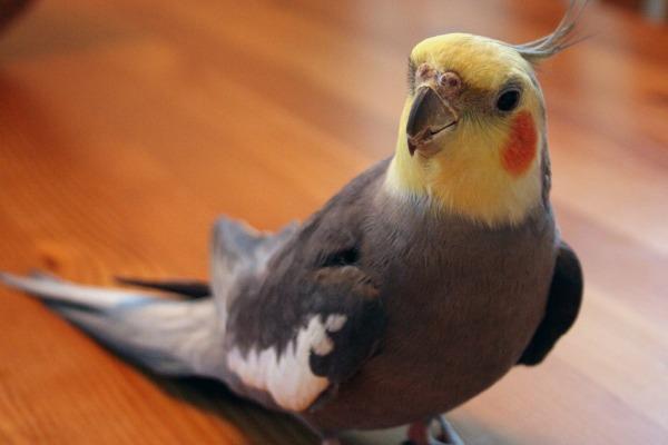 Важные аксессуары для птиц. Игрушки и необходимые удобства