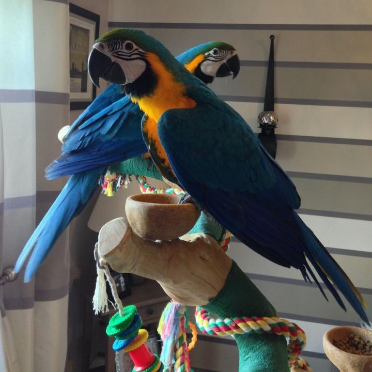 Важные аксессуары для птиц. Питание и средства для чистки клетки