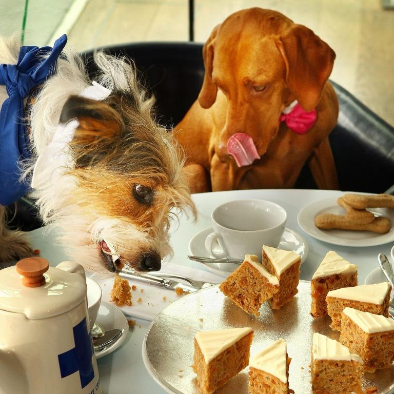 15 продуктов, которые не стоит давать собаке. Кофе и кукуруза