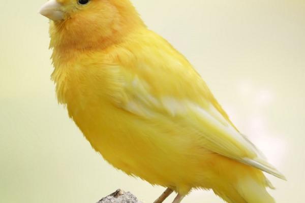 Основы ухода за птицей
