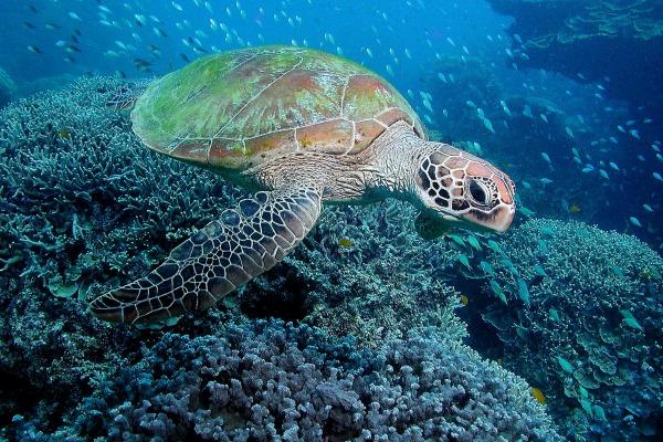 Черепаха -Televeterinar