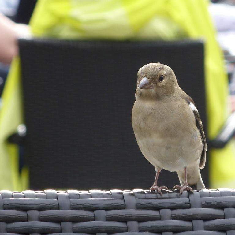 Дрессировка домашней птицы
