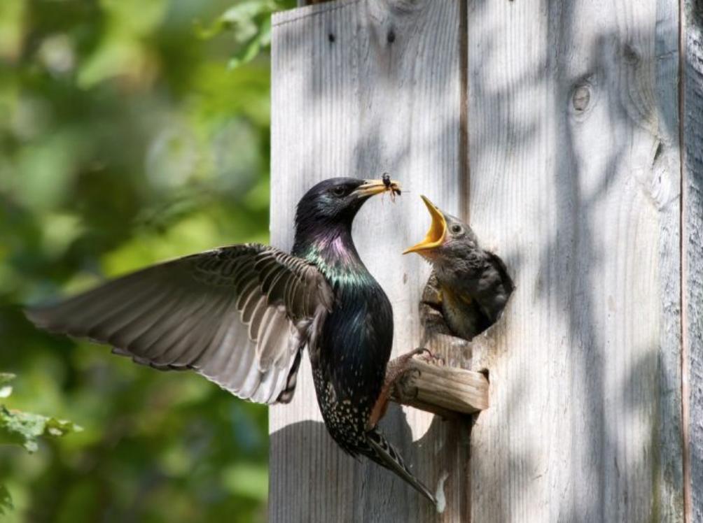 Чем кормить городских птиц Телеветеринар
