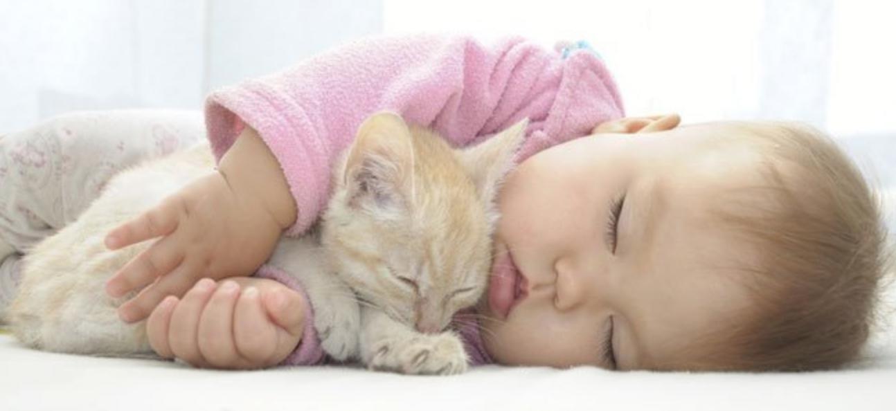 Дети и животные Телеветеринар