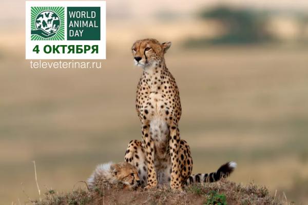 Всемирный день животный - Televeterinar.ru
