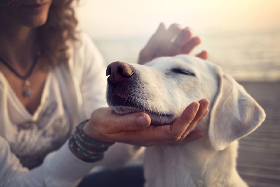 Собака продлевает жизнь своему человеку - Телеветеринар