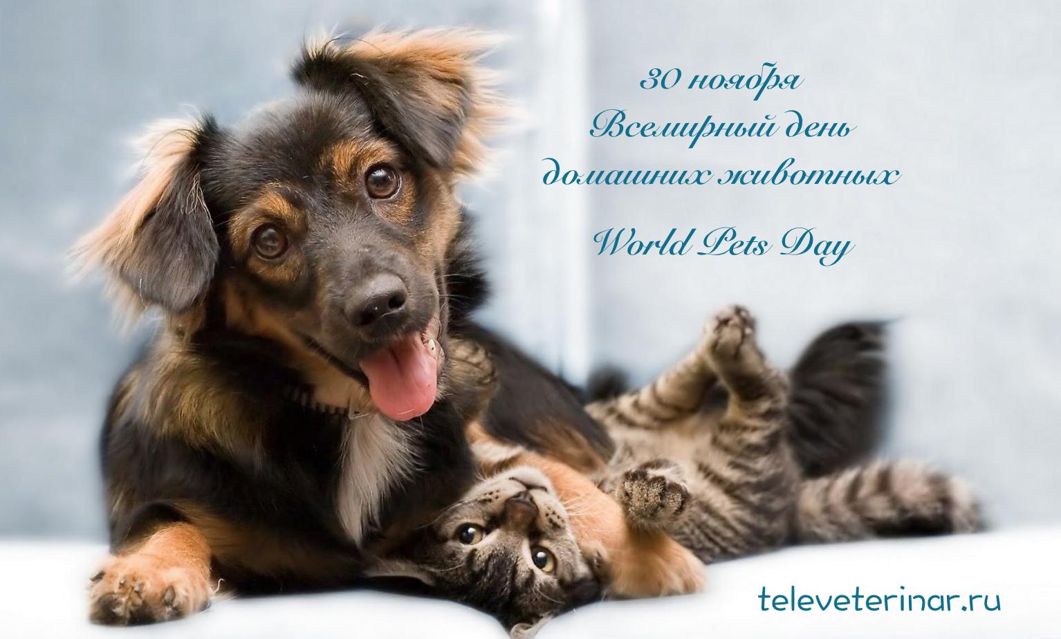 Всемирный день домашних животных - Телеветеринар