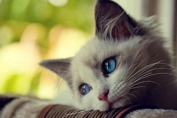 День кошек - Телеветеринар