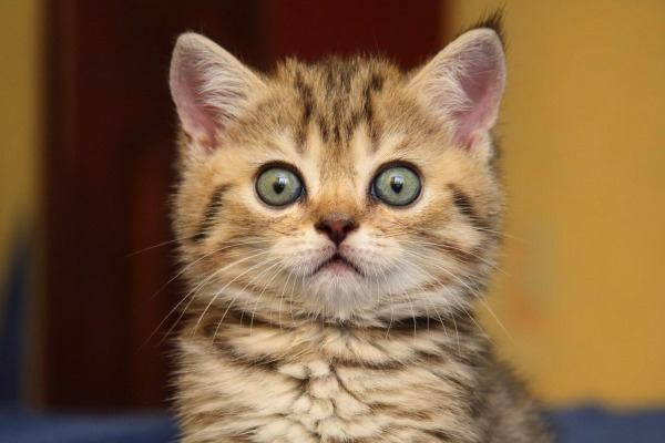 Как удивить кота - Телеветеринар