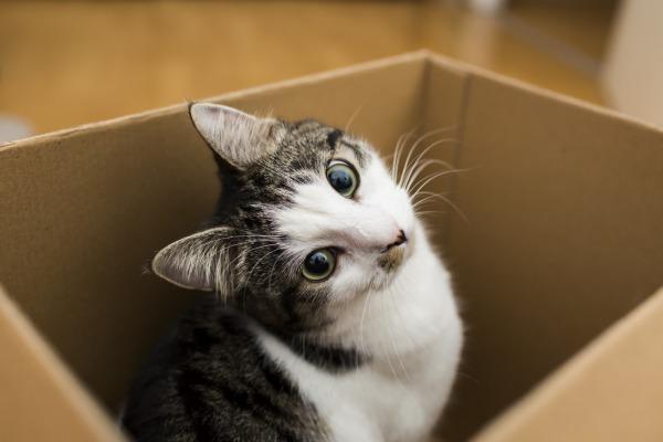 Кошки любят коробки - Телеветеринар