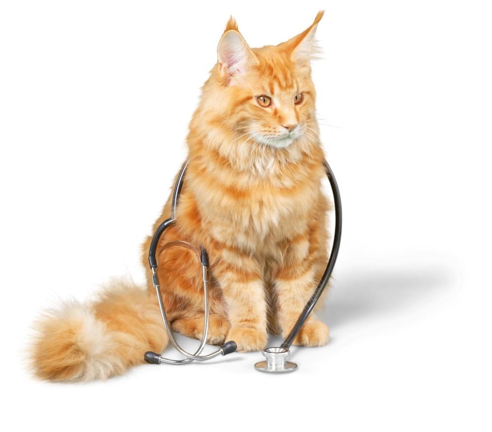 Ядовитые продукты для кошек - Televeterinar