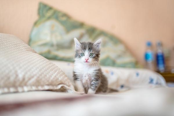 Как кормить котенка - Телеветеринар