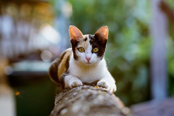 Коронавирус у кошек - Телеветеринар