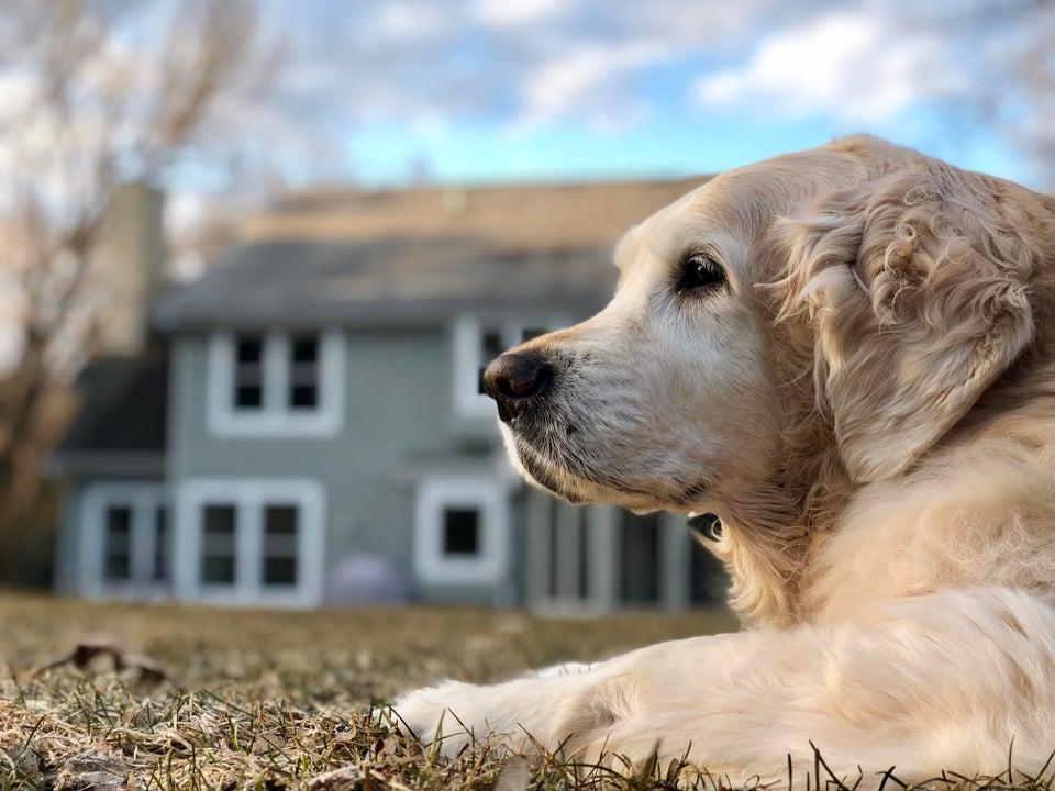 Опухоль молочных желез у собак - телеветеринар